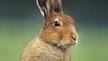 Naturefile - Rabbits.