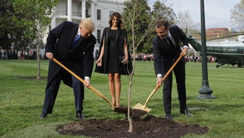 The French president gave the tree to Donald Trump in 2018
