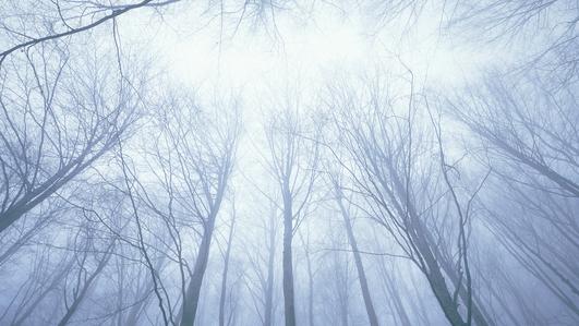 Climate Change: Reforestation