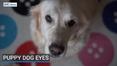 RTÉ News: Puppy Dog Eyes