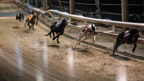 Last month an RTÉ Investigates programme showed up to 6,000 greyhounds are being culled each year because they are too slow.