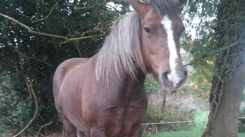 The pony was taken from the Clonmel area on 29 June (Pic: @GardaTraffic)