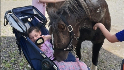 Cream acts as a therapy pony for Erin who has cerebral palsy