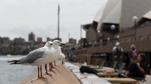 Seagulls eye their next meal at the Sydney Opera House in Australia