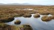 Naturefile - Life of the Bog (rpt)