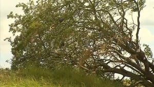 There are nine so-called 'wishing trees' or 'fairy trees' on the Hill of Tara