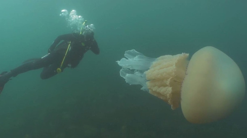 Image: Dan Abbott/Lizzie Daly/Wild Ocean Week