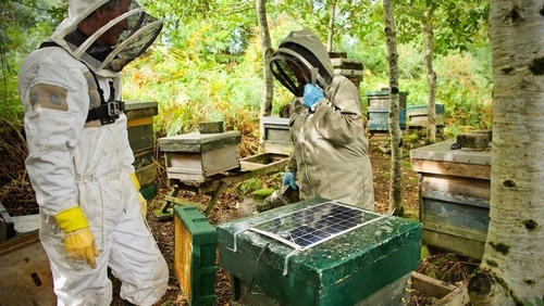 ApisProtect is currently monitoring the health of 20 million honey bees across the world