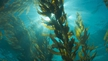 Nature file - Seaweed