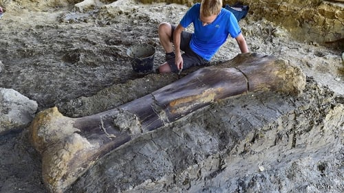 Foot-Long Dinosaur Thigh Bone Discovered in South of France
