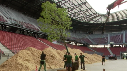 Three hundred trees are being transplanted