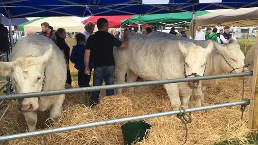 Progress reported as beef talks adjourn