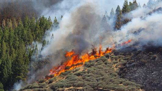 Gran Canaria wildfire sparks mass evacuation