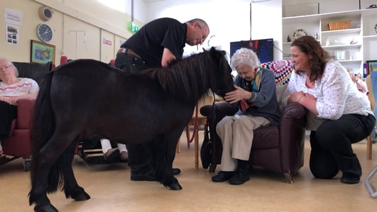 Pony brings joy to Wicklow care centre residents