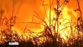 Almost 73,000 fires have engulfed the Brazilian rainforest this year