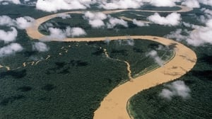 The Amazon forest is home to a biodiversity sanctuary that is unique in the world