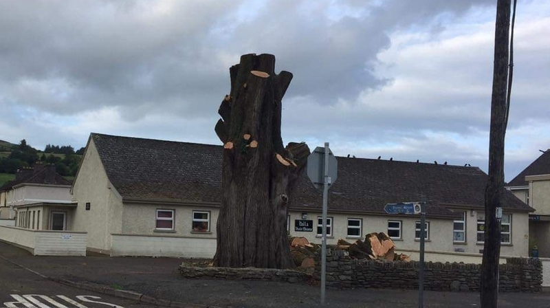 Felling of historical tree angers west Cork community