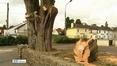 Nine News (Web): Felling of historical tree angers west Cork community