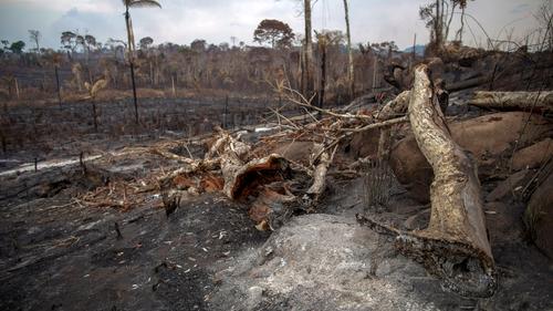 Burnt Amazon rainforest near Novo Progresso, Para state, Brazil