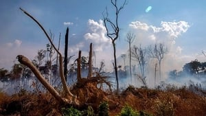 Nearly 80,000 forest fires have broken out in Brazil since the beginning of the year