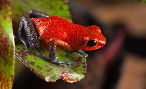 south american amazon rain forest