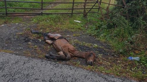 DSPCA inspectors found the foal in Baldonnel (Pic: DSPCA)