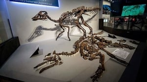 A partial tail was first found in northern Japan in 2013 and later excavations revealed the entire skeleton