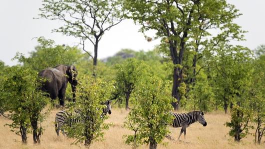 Travel:  Zimbabwe