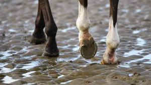 Evolution is a funny thing - how do such spindly legs support half a tonne of racehorse?