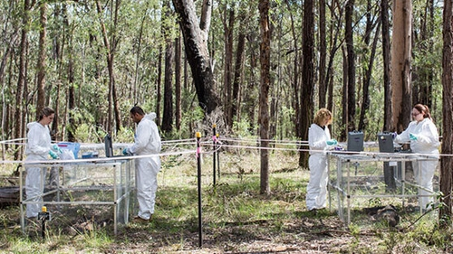 Scientists working at the body farm (Pic: University of Technology Sydney)