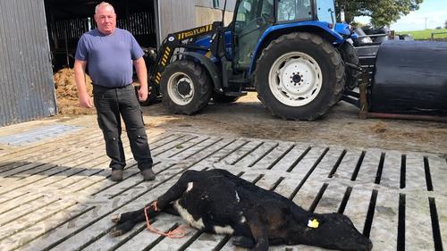 There are no knackeries open to handle a carcass for farmer John De Nash