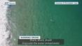 RTÉ News: Shark, shark, shark! Drone used to warn swimmer