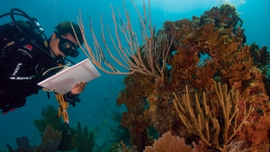 A scientist studying coral reefs in the Virgin Islands National Park. Photo: NPS Climate Change Response via Climate Visuals