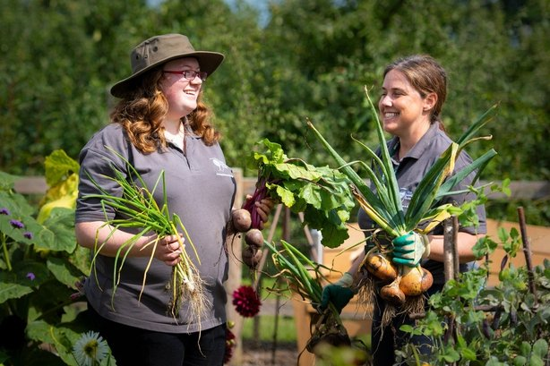 Emma Griffiths and her colleague Elin Campbell Wooding harvesting crops in the 'Soup Share Bed' at RHS Garden Wisley (RHS/PA)