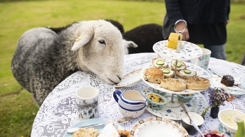 """Tea with a """"naughty sheep"""" is just one of the Experiences on offer. Photo: Airbnb"""