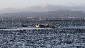 The whale is believed to bethe same whale thatdied in Dublin Bay earlier this week