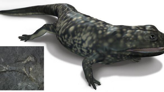 Bones of 325 million-year-old amphibian found in Clare
