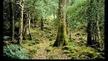 Naturefile - Wonderful Woodlands