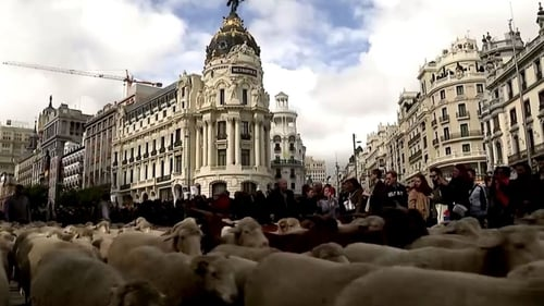 Sheep farmers pay a nominal charge in symbolic acknowledgement of a 1418 agreement