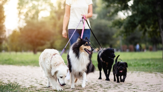 Talking Lamp Posts Warning Dog Owners To Clean Up After Their Pets