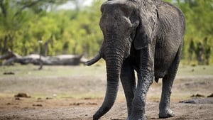 The elephants died at Hwange National Park
