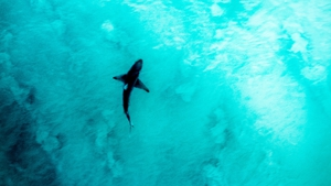 Despite tens of millions of visits to the beach in Australia annually, shark attacks remain rare (File image)
