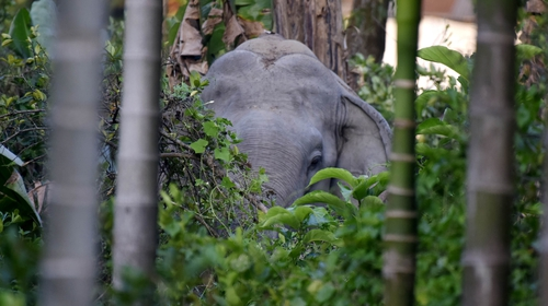 The Assam area has recorded high numbers of dangerous incidents in recent years amid rampant deforestation.