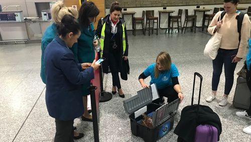 Mara's passage through the airport gave rise to much excitement among staff and early morning travellers
