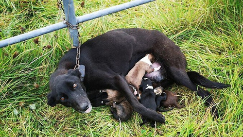 Emmy Lou and her pups were rescued after ISPA and gardaí were alerted