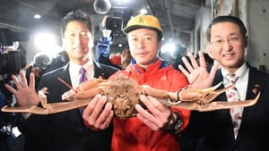 The snow crab displayed at the auction at Tottori port