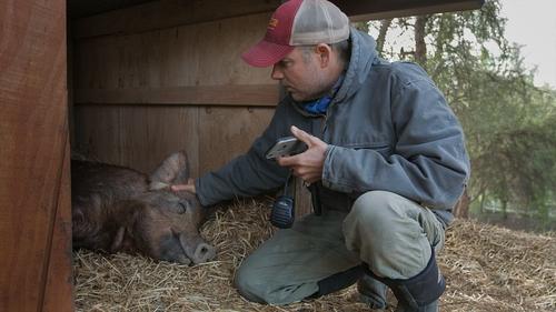 John Chester nursing Emma on The Biggest Little Farm in Ventura County