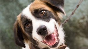 The research suggests dogs recognise when humans are speaking a new word