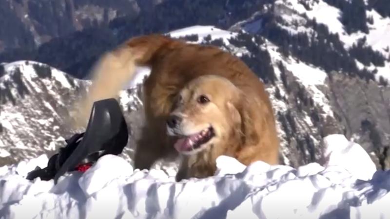 Rescue crews and dogs prepare for Alps avalanche season