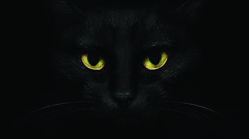 Yeah, I'm a black cat, what about it?